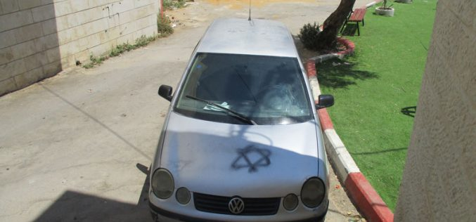مستعمرون متطرفون يعتدون على الممتلكات الفلسطينية في قرية حارس / محافظة سلفيت