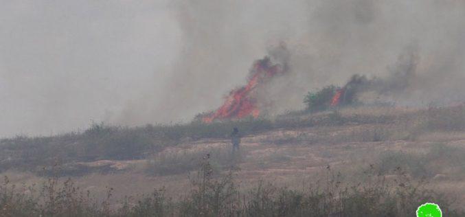 إحراق 23 دونماً من الأراضي الرعوية بسبب التدريبات العسكرية في واد المالح / محافظة طوباس