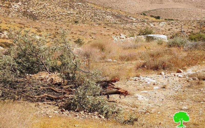 الاحتلال يدمر محمية رعوية في أم الخير شرق يطا / محافظة الخليل