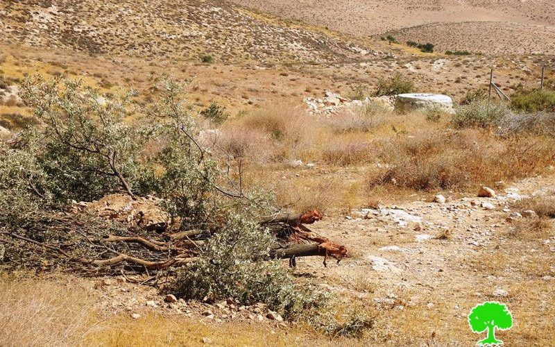 The Israeli Occupation destroys a Pastoral reserve in Umm Al-Khair east Yatta/ Hebron governorate