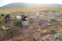 IOF wreck 27 beehives in Bardala village/ Tubas governorate