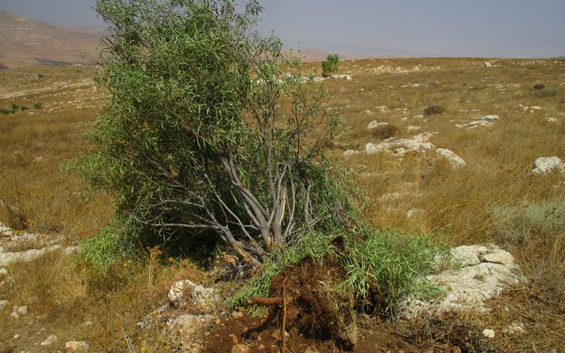 """The occupation authorities destroyed cisterns and ravaged lands in """"Umm Kbaish""""/ Tubas governorate"""