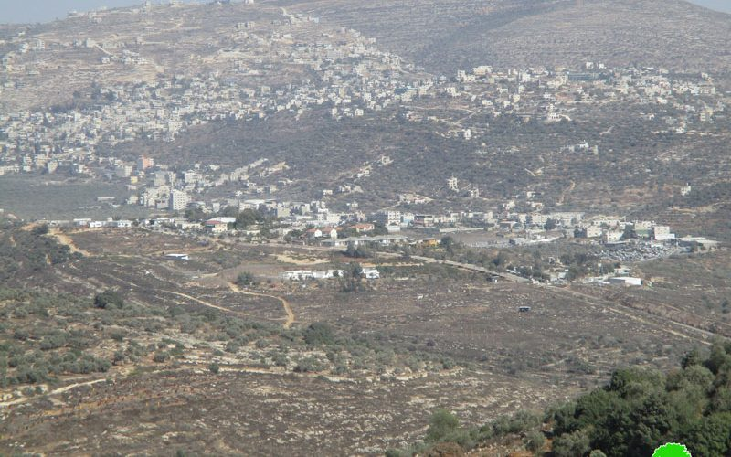 Israeli settlers steal the harvest of 35 olive trees in Yasouf / Salfit governorate