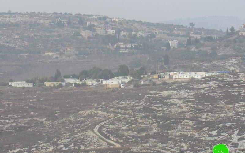 مستعمرون يسرقون ثمار الزيتون من حقول قرية فرعتا / محافظة قلقيلية