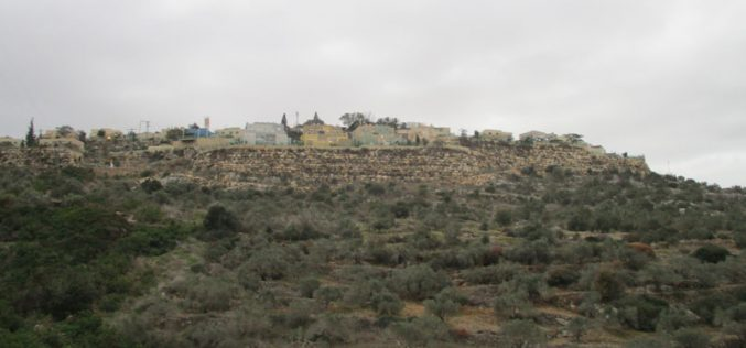 "Settlers of ""Karnei Shamron"" pollute olive groves in Kafr LAqif village / Qalqilya governorate"