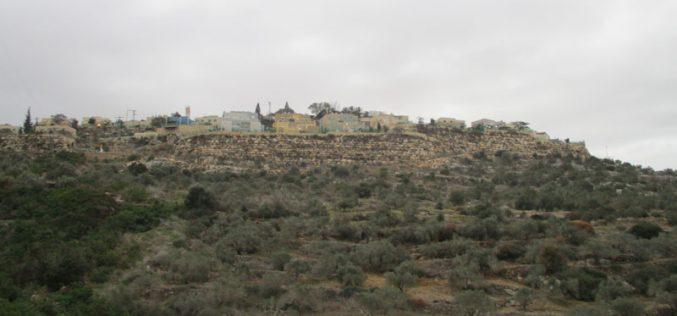 "Settlers of ""Karnei Shamron"" pollute olive groves in Kafr LAqif village / Qalqilya governorate"