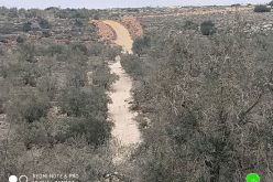 The Israeli Occupation prohibit rehabilitating an agricultural road in Kafr Ad-Dik / Salofit governorate