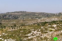 "Settlers of ""Havat Gilad"" sabotaged 18 olive trees in Fara'ata /Qalqilya governorate"