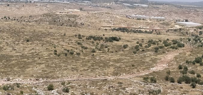 إنشاء بؤرة استعمارية جديدة على أراضي قرية شوفة تسببت في تخريب 147 شجرة زيتون