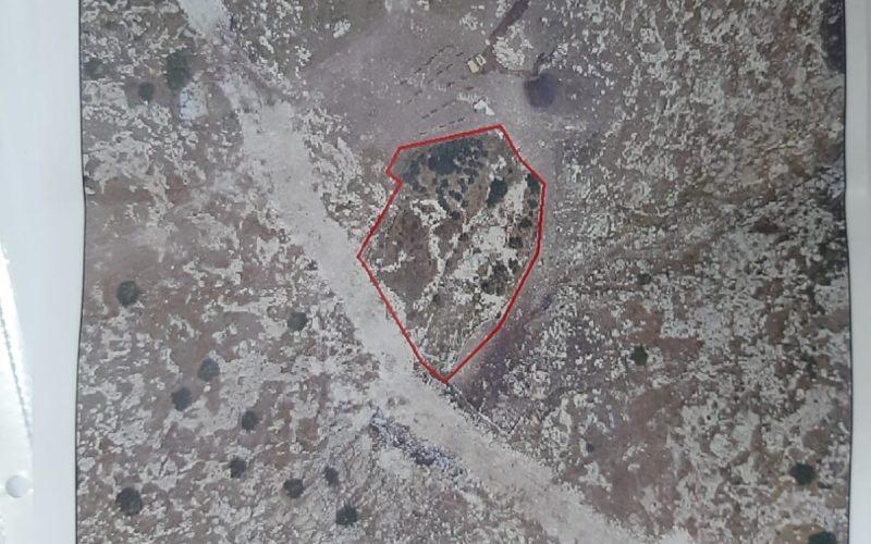 إخطارات بوجوب الإخلاء لـ 165 شجرة زيتون في قرية بردلة / محافظة طوباس