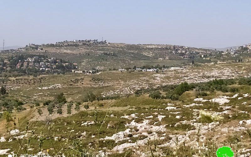 """مستعمرو مستعمرة  """"حفات جلعاد""""  يتلفون 18 شجرة  زيتون في قرية  فرعتا / محافظة قلقيلية"""