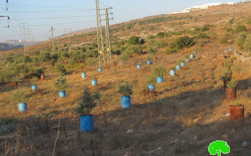 Eviction notice for 10 dunums – Immatin village / East Qalqilya