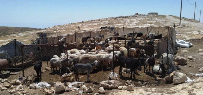 الاحتلال يفكك ويصادر حظائر ومنشآت زراعية في قرية بيرين جنوب الخليل
