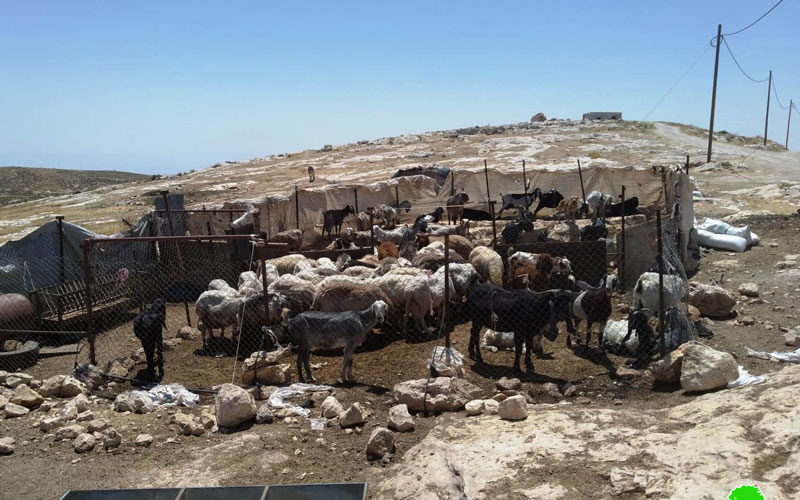 The occupation targets barns and agricultural facilities in Birin/ South Hebron