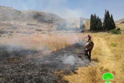 مستعمرون يحرقون 32 دونم من الأراضي الزراعية والمراعي في منطقة عين سامية / محافظة رام الله