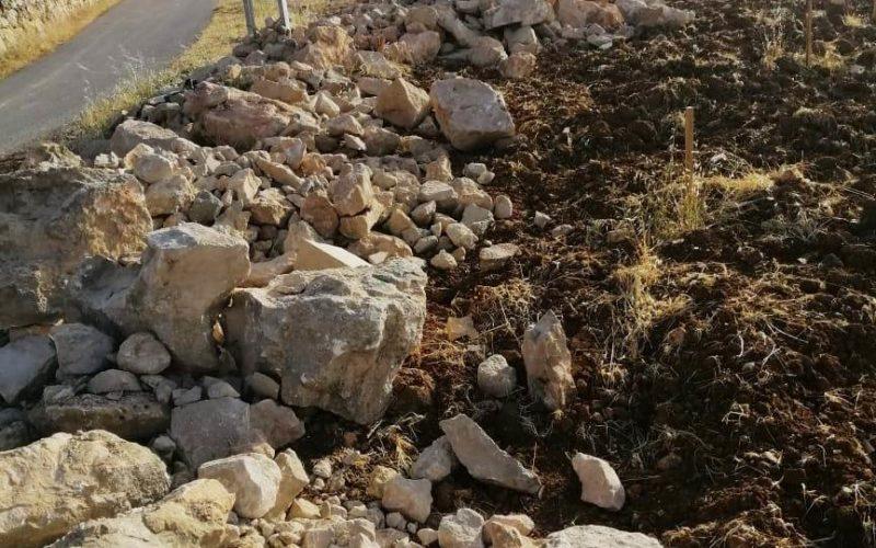 المستعمرون يصعدون اعتداءاتهم على أراضي المواطنين ومحاصيلهم بمحافظة الخليل