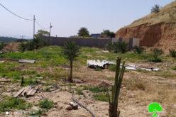 """إخطار بـ"""" إخلاء أراضي"""" مزروعة بالنخيل في قرية الجفتلك شمال أريحا"""