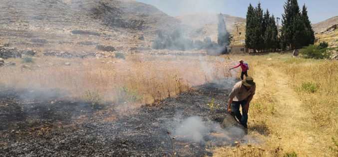 Settlers set fire in 32 dunums of agricultural lands in Ein Samiya / Ramallah governorate