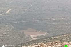 On the pretext that it is a natural reserve.. The occupation notifies a plot in Kufur Thulth / Qalqilya governorate