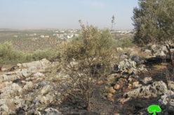 """مستعمرو مستعمرة """" ليشم"""" يحرقون 23 دونماً في بلدة دير بلوط بمحافظة سلفيت"""