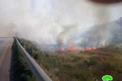 """مستعمرو عناب"""" يضرمون النيران في 400 دونم مزروعة بالزيتون في أراضي قرية رامين/ محافظة طولكرم"""