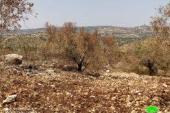 إحراق 103 أشجار زيتون في قرية ظهر العبد / محافظة جنين