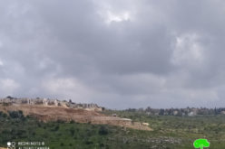 Leveling lands in Sarta for the Favor of Barkan settlement / Salfit