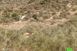 Halt of Work notice for an agricultural facility in Jayyous / Qalqilya governorate