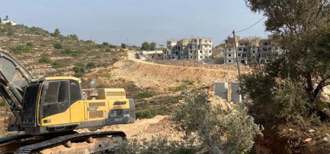 الاحتلال يقتلع 22 شجرة زيتون في قرية رأس كركر بمحافظة رام الله