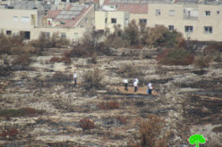 Settlers carry out an Arson Attack in Saffa and Bal'in/ Ramallah governorate