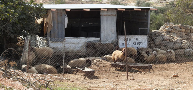 Notice to remove an agricultural facility in Al-Simiya, west of Al-Samu, Hebron Governorate