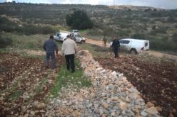 Israeli settlers cut down 35 olive trees from the lands of Brogin town / Salfit governorate