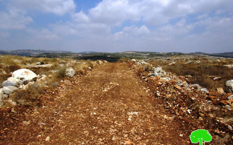 مستعمرون يشقون طريق ويقطعون 20 شجرة زيتون في أراضي كفر اللبد بمحافظة طولكرم