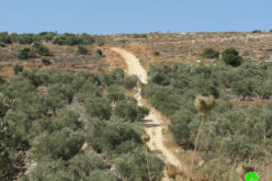 Halting Road Rehabilitation- west Deir Istiya / Salfot governorate