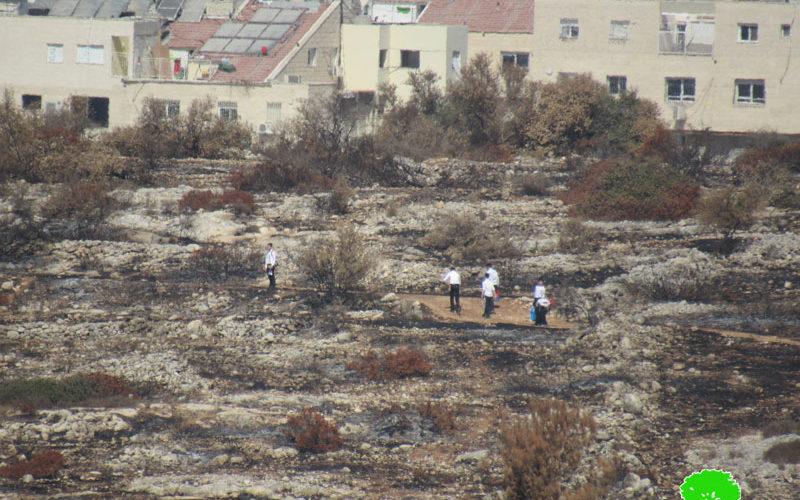 مع بدء موسم القطاف … مستعمرون يحرقون المئات من أشجار الزيتون في قريتي صفا وبلعين بمحافظة رام الله