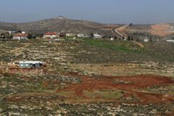 Settlers ravage lands and uproot trees in Al-Mughayyir / Ramallah