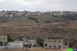 Seizing and planting Palestinian owned land at the hands of Israeli Settlers