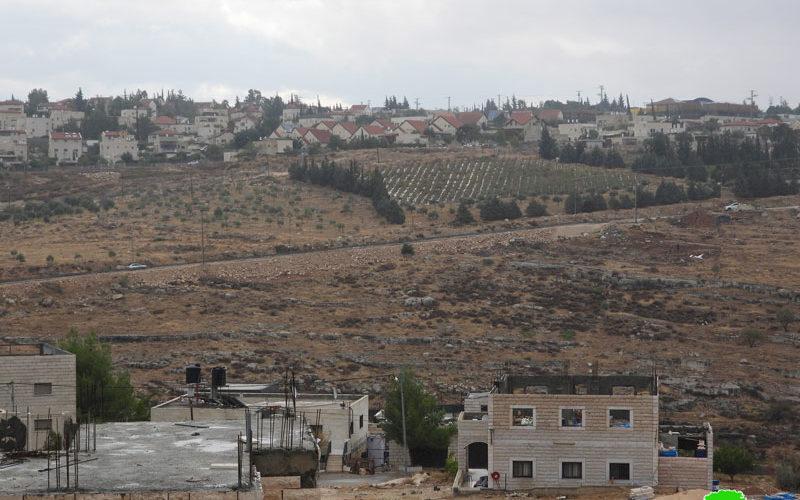 مستعمرون يعتدون على أراضٍ زراعية في بلدة تقوع بمحافظة بيت لحم