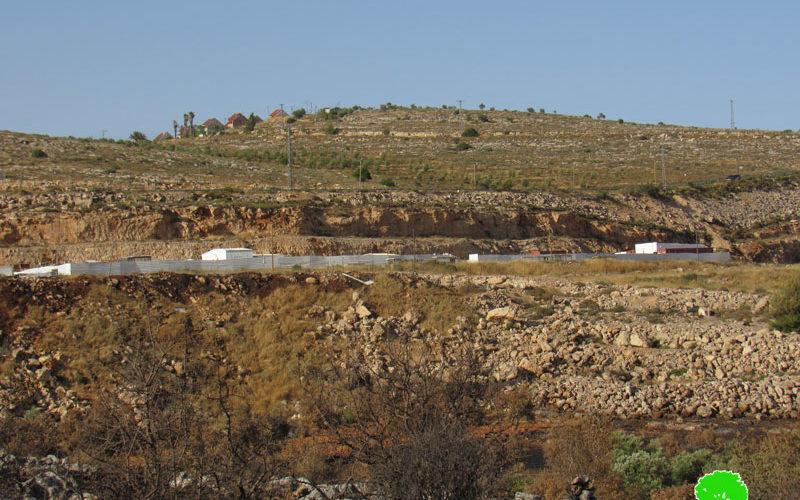 مستعمرون يحرقون 104 شجرة زيتون في بلدة ترمسعيا / محافظة رام الله
