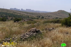 الشروع بتجهيز مخططات لإنشاء مقبرة يهودية على أراضي محافظة سلفيت