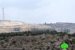 Colonists open a road and cut down 20 olive trees in Kafr Al-Labad / Tulkarm governorate