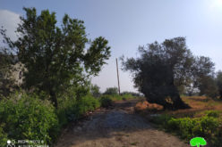 Halting Work on Road rehabilitation in Kafr Ad-Dik / Salfit governorate