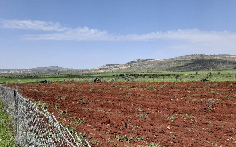 'Adei Ad colonists carry out another attack against Farmer 'Awad Turmus'ayya / Ramallah governorate