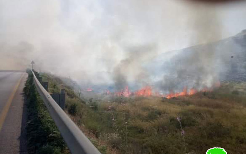 Innab colonists set fire to 400 dunums of olive groves in Ramin village / Tulkarm