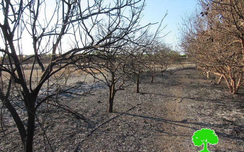 Israeli Occupation Forces set 13 agricultural dunums ablaze in Qalqilya governorate