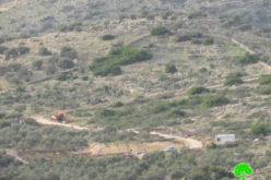 مستعمرون يقطعون أشجار زيتون ويشقون طرق زراعية في خلة حسان ببلدة بديا / محافظة سلفيت