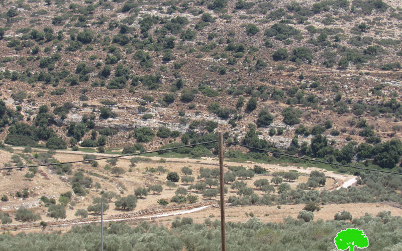 New Colonial Road to be opened in Kafr Thulth / Qalqilya governorate