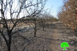 Israeli Occupation Forces set 13 agricultural dunums ablaze in Qalqilya governorate