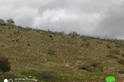 Colonists Impose Control Over Vast Areas of Land in the Jordan Valley / Tubas governorate