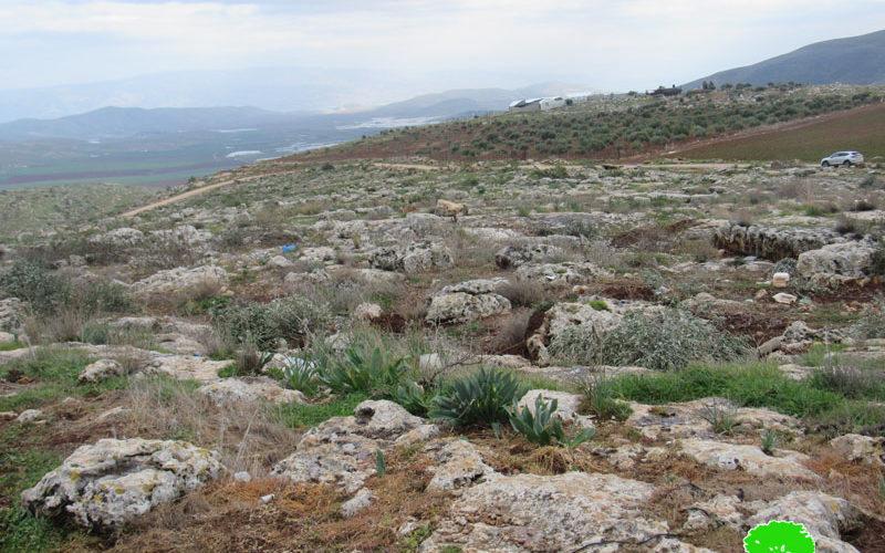 الاحتلال الإسرائيلي يعيد اقتلاع عشرات من الغراس في خربة عينون بمحافظة طوباس